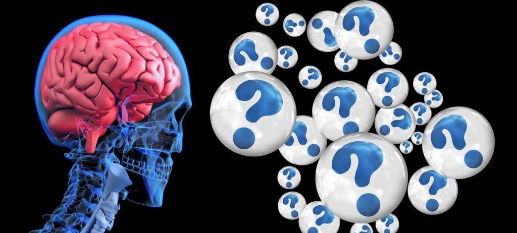 brain 2546101