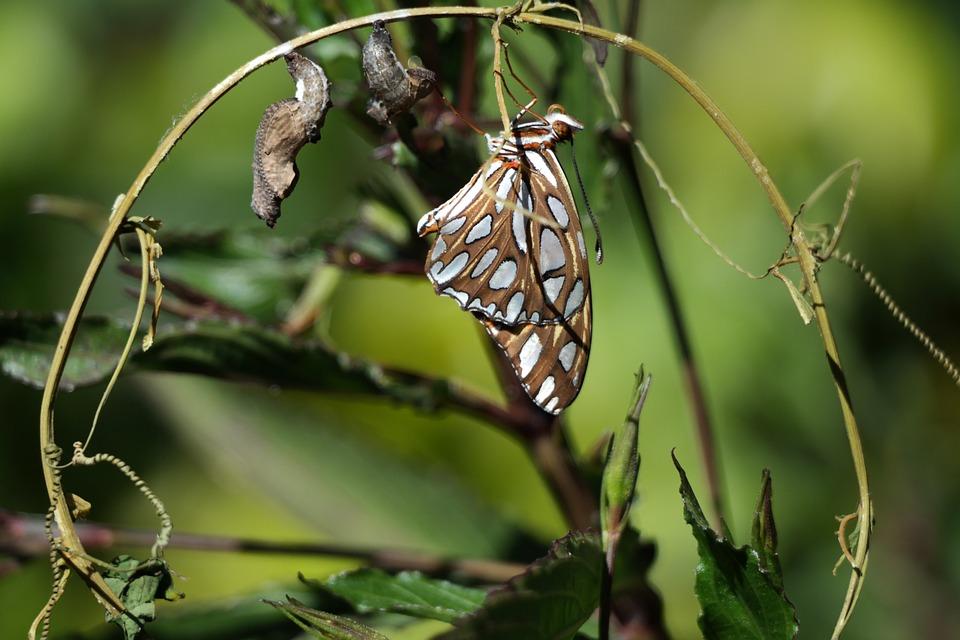 4butterfly