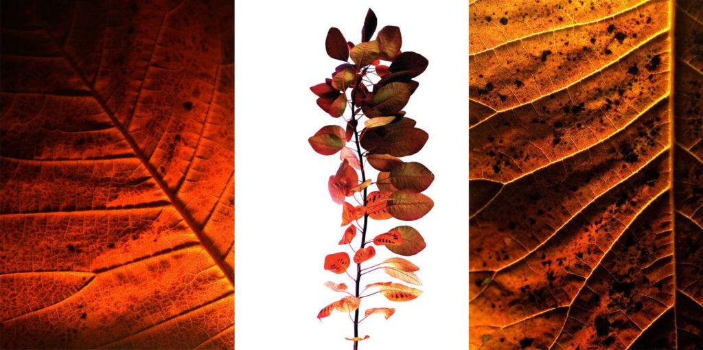 autumn leaves photo greetings cards