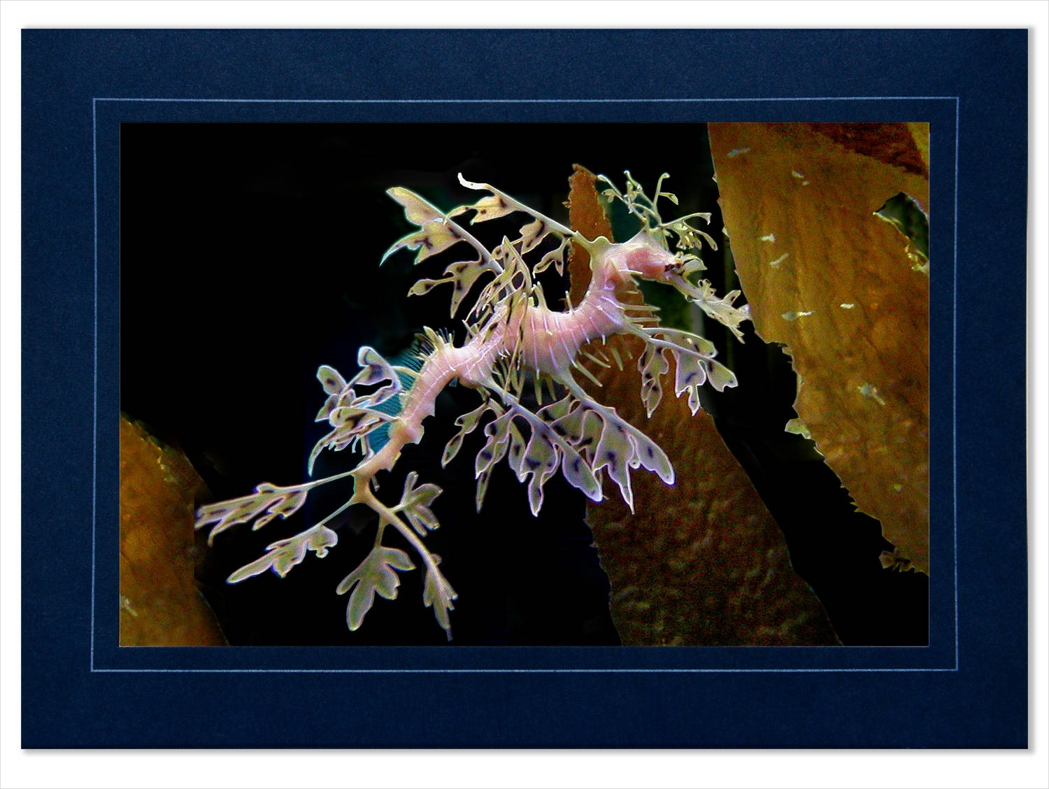 leafy sea dragon photo greeting card
