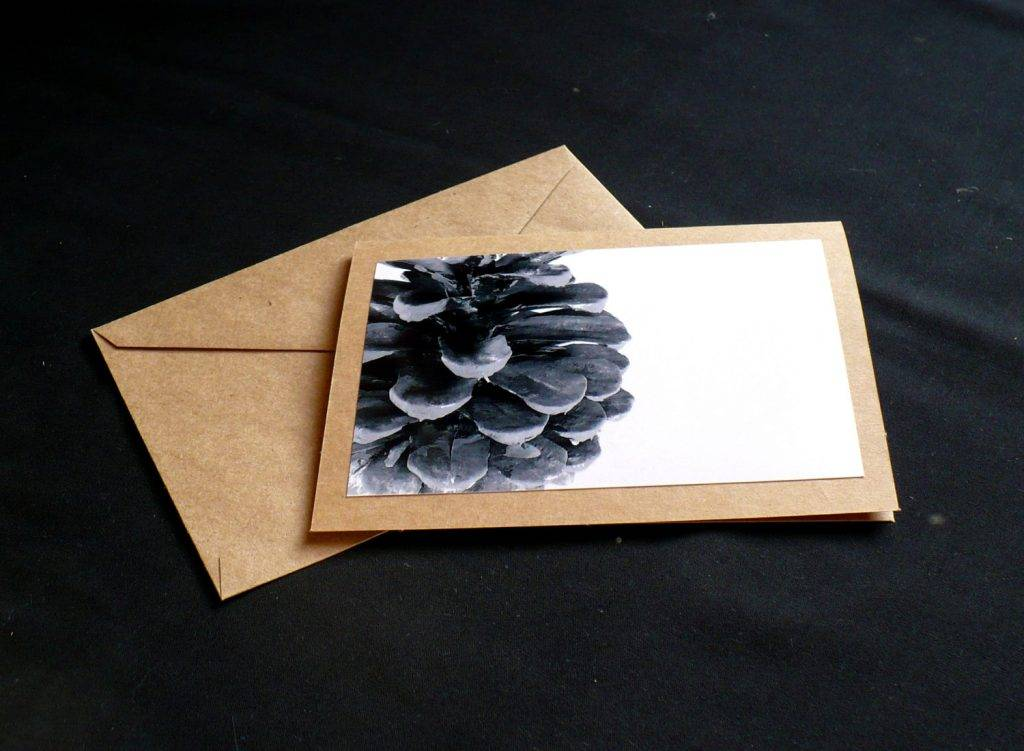 pine cone photography blank photo greeting card