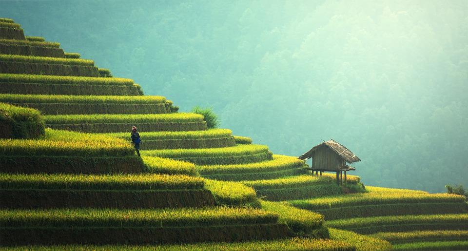 rice terraces travel