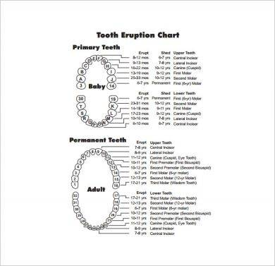 free teething timeline chart example1