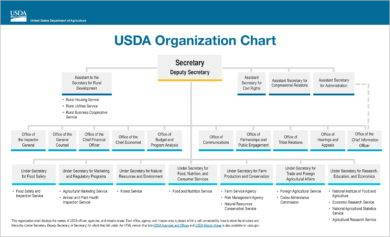 usda organizational flow chart template example1