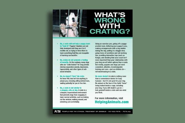 peta awareness flyer