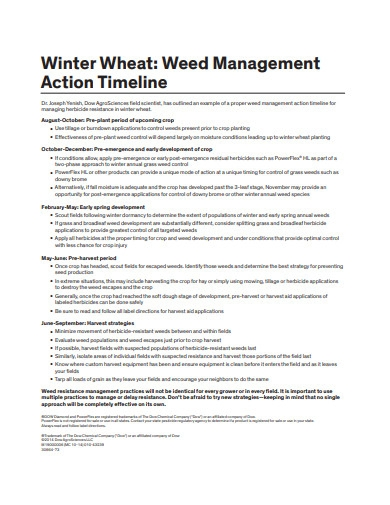 management action timeline